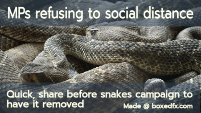 Funny UK political meme featuring a nest of snakes and with the caption: 'Members of parliament are refusing to social distance. Quick, share this before snakes campaign to have it removed'